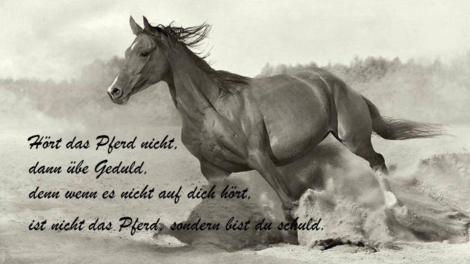Wer glaubt, mit Pferden ist leicht Geld zu verdienen, beschäftigt sich offensichtlich nur mit Hunden.