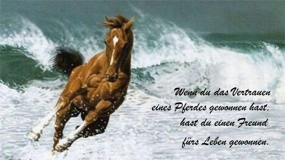 Gib einem Pferd was es braucht, und es wird dir sein Herz schenken.