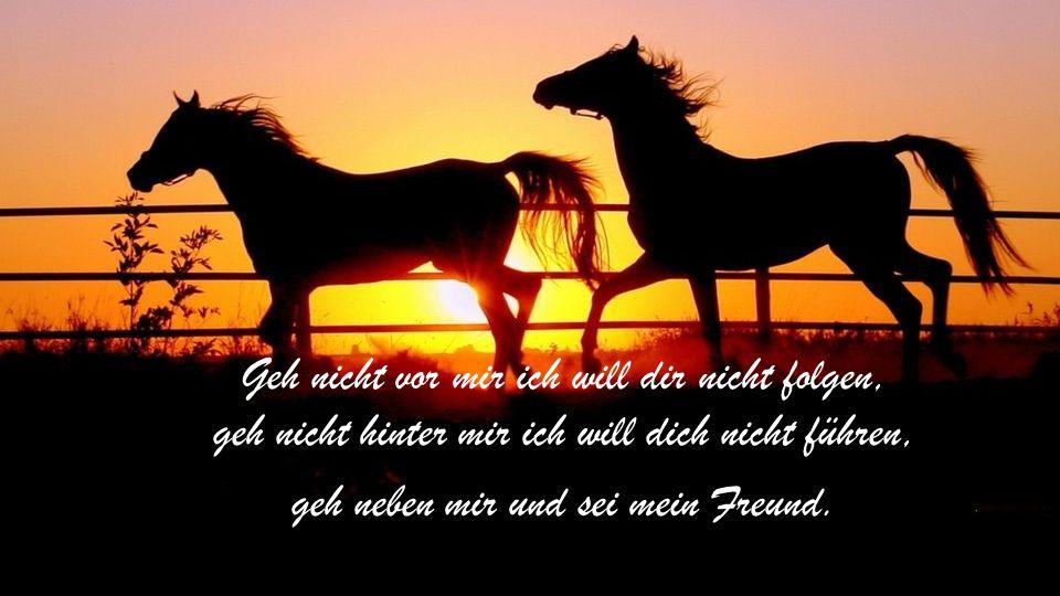 Wenn der Mensch je eine große Eroberung gemacht hat, dann hat er das Pferd als Freund gewonnen.