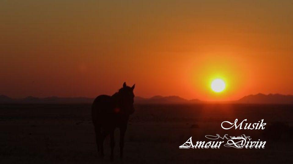 Pferde haben auch Gefühle. Breche sie nicht, denn ein Pferd verzeiht, vergisst aber nicht.