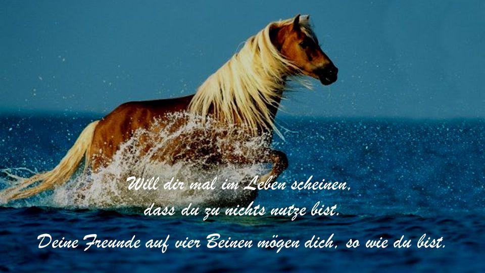 Das ganze Glück der Erde spiegelt sich in den Augen der Pferde.