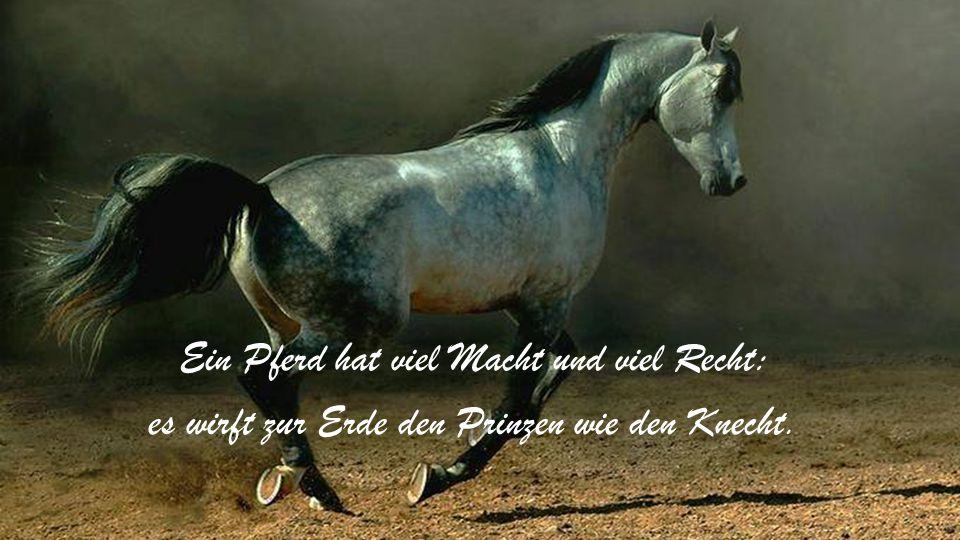Ich habe ein wunderbares Pferd, es hat die Leichtigkeit des Windes und des Feuers Hitze, aber wenn sein Reiter es besteigt, ist seine Sanftmut nichts