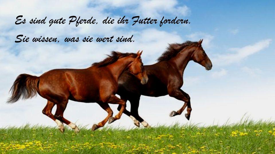 Ein Pferd hat viel Macht und viel Recht: es wirft zur Erde den Prinzen wie den Knecht.