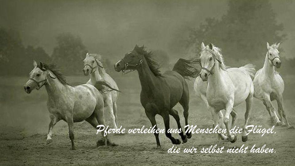 Es sind gute Pferde, die ihr Futter fordern. Sie wissen, was sie wert sind.