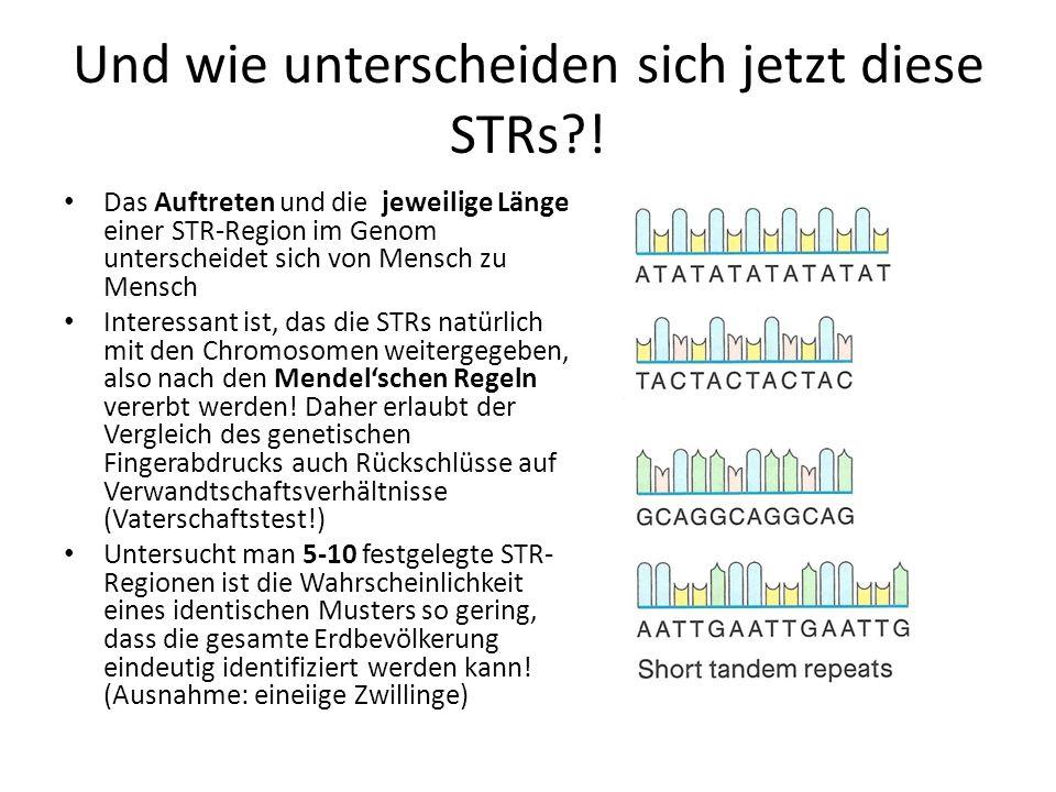 Und wie unterscheiden sich jetzt diese STRs?! Das Auftreten und die jeweilige Länge einer STR-Region im Genom unterscheidet sich von Mensch zu Mensch
