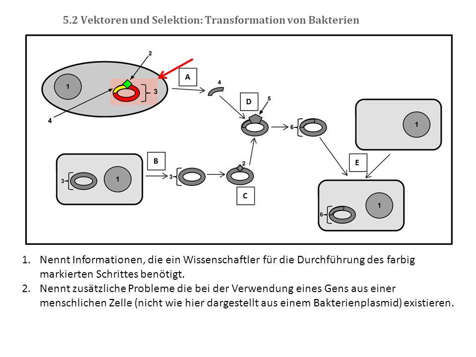1.Nennt Informationen, die ein Wissenschaftler für die Durchführung des farbig markierten Schrittes benötigt. 2.Nennt zusätzliche Probleme die bei der