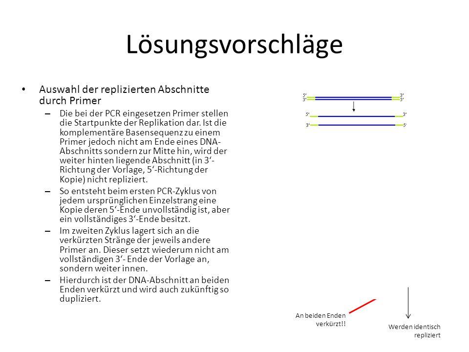 Lösungsvorschläge Auswahl der replizierten Abschnitte durch Primer – Die bei der PCR eingesetzen Primer stellen die Startpunkte der Replikation dar. I