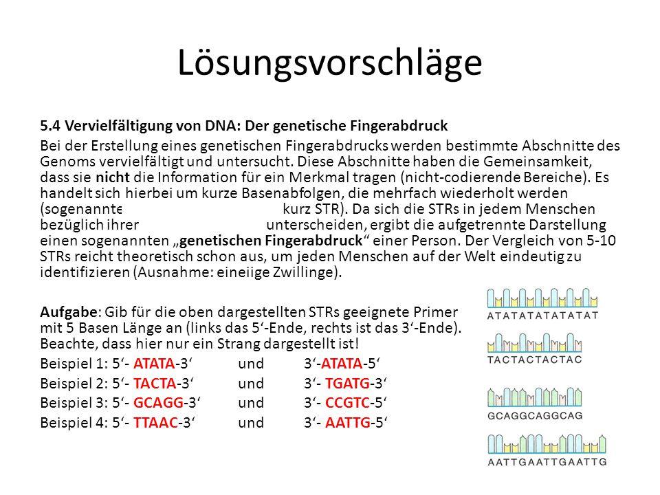 Lösungsvorschläge 5.4 Vervielfältigung von DNA: Der genetische Fingerabdruck Bei der Erstellung eines genetischen Fingerabdrucks werden bestimmte Absc