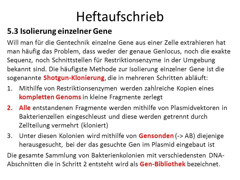 Heftaufschrieb 5.3 Isolierung einzelner Gene Will man für die Gentechnik einzelne Gene aus einer Zelle extrahieren hat man häufig das Problem, dass we