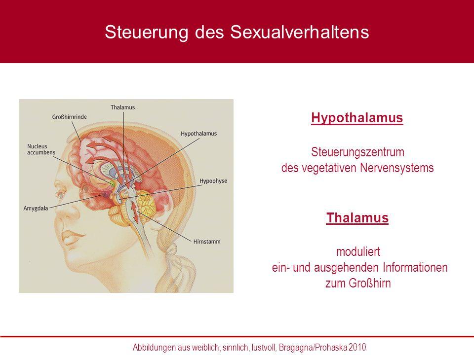 Hypothalamus Steuerungszentrum des vegetativen Nervensystems Thalamus moduliert ein- und ausgehenden Informationen zum Großhirn Abbildungen aus weibli