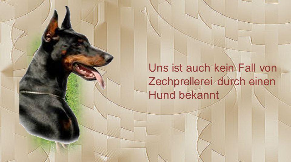 Uns ist auch kein Fall von Zechprellerei durch einen Hund bekannt