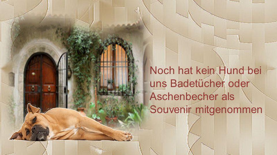Noch hat kein Hund bei uns Badetücher oder Aschenbecher als Souvenir mitgenommen