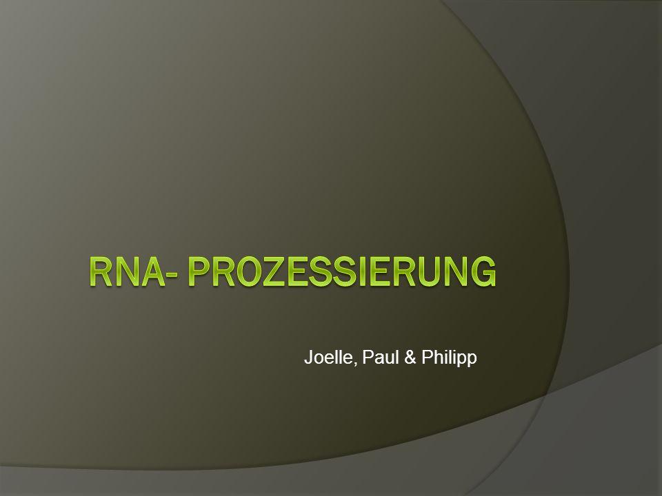 Prozess vom Gen zum Protein  Erste Phase: gentetische Info.