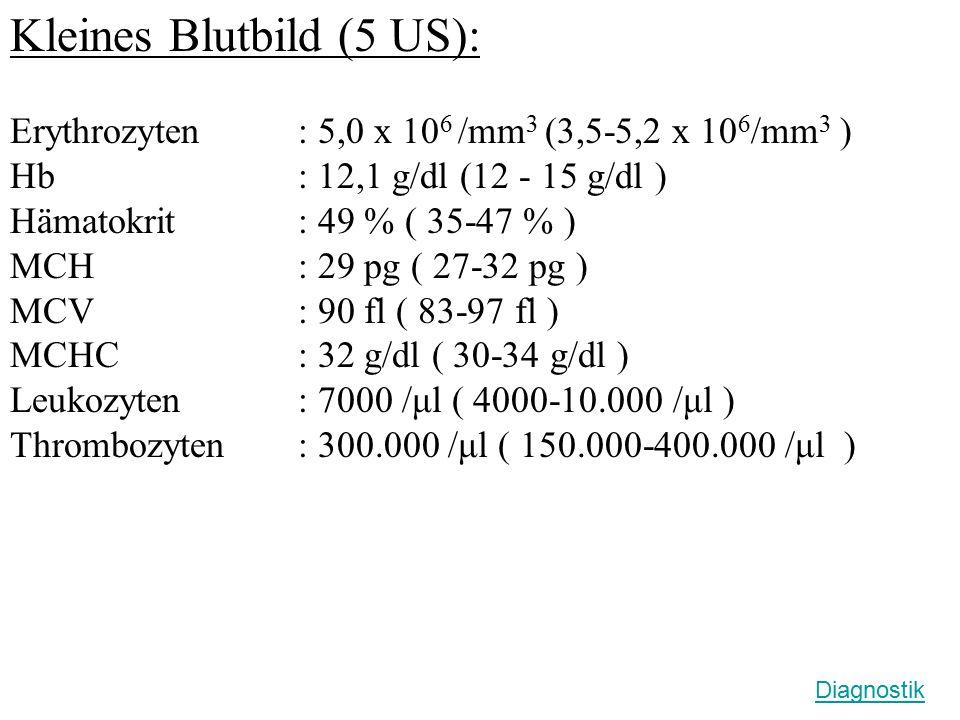 Kleines Blutbild (5 US): Erythrozyten: 5,0 x 10 6 /mm 3 (3,5-5,2 x 10 6 /mm 3 ) Hb: 12,1 g/dl (12 - 15 g/dl ) Hämatokrit : 49 % ( 35-47 % ) MCH : 29 pg ( 27-32 pg ) MCV : 90 fl ( 83-97 fl ) MCHC : 32 g/dl ( 30-34 g/dl ) Leukozyten : 7000 /μl ( 4000-10.000 /μl ) Thrombozyten: 300.000 /μl ( 150.000-400.000 /μl ) Diagnostik