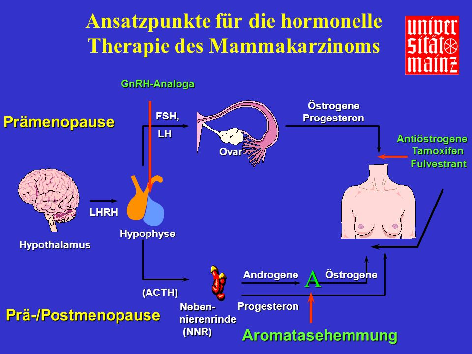 Ansatzpunkte für die hormonelle Therapie des Mammakarzinoms Hypothalamus Prä-/Postmenopause Prä-/Postmenopause Prämenopause (ACTH) Neben- nierenrinde