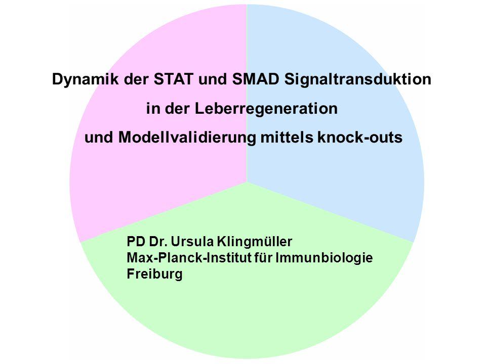 Dynamik der STAT und SMAD Signaltransduktion in der Leberregeneration und Modellvalidierung mittels knock-outs PD Dr. Ursula Klingmüller Max-Planck-In