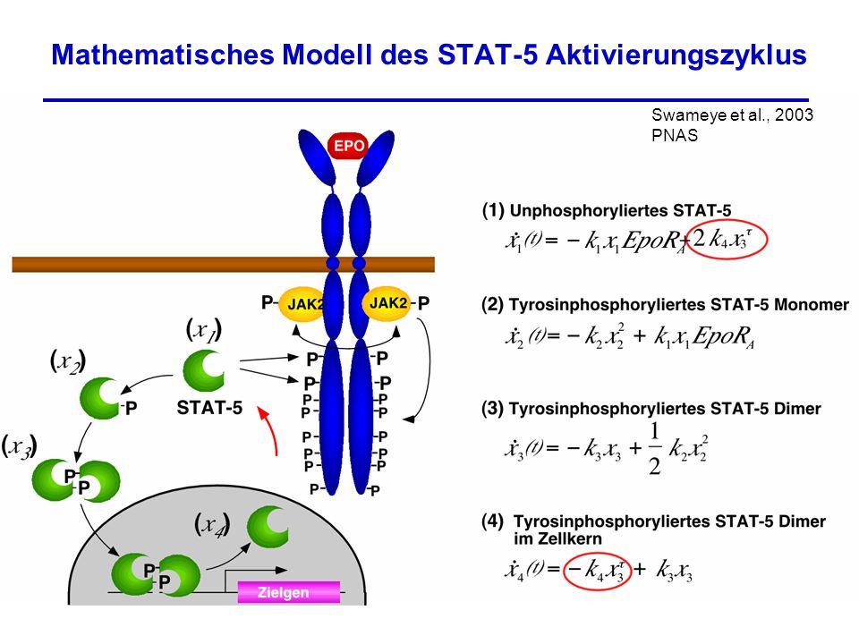 Mathematisches Modell des STAT-5 Aktivierungszyklus.... Swameye et al., 2003 PNAS