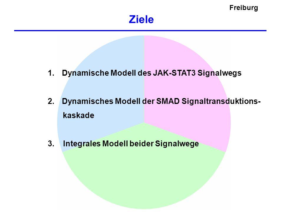 Freiburg Ziele 1. Dynamische Modell des JAK-STAT3 Signalwegs 2. Dynamisches Modell der SMAD Signaltransduktions- kaskade 3. Integrales Modell beider S