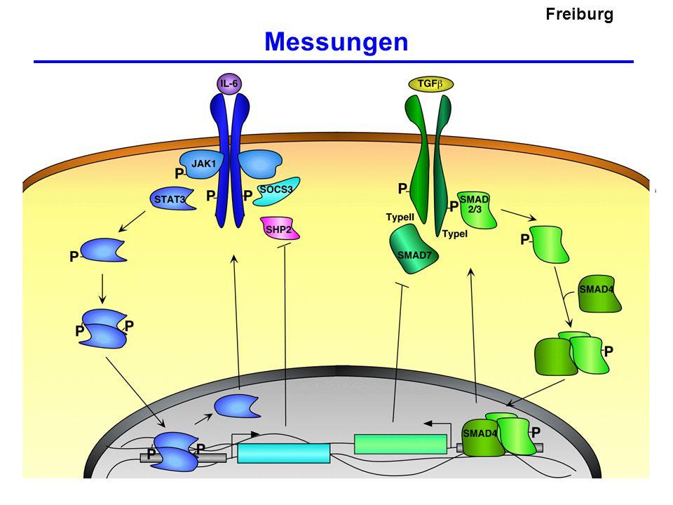 Freiburg Messungen