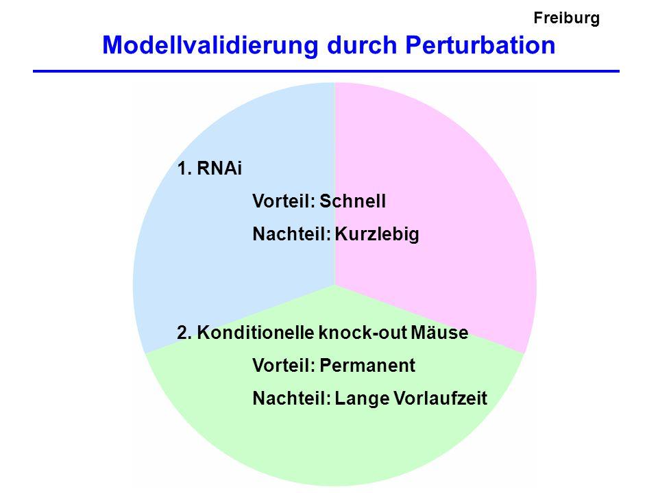 Freiburg Modellvalidierung durch Perturbation 1. RNAi Vorteil: Schnell Nachteil: Kurzlebig 2. Konditionelle knock-out Mäuse Vorteil: Permanent Nachtei