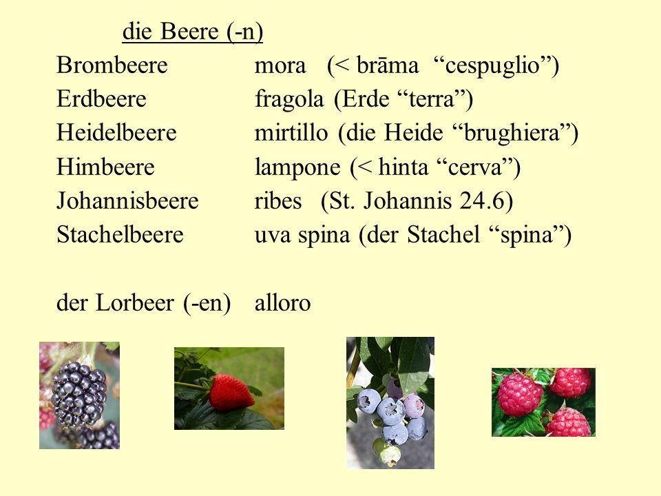 die Beere (-n) Brombeeremora (< brāma cespuglio) Erdbeerefragola (Erde terra) Heidelbeeremirtillo (die Heide brughiera) Himbeerelampone (< hinta cerva) Johannisbeereribes(St.