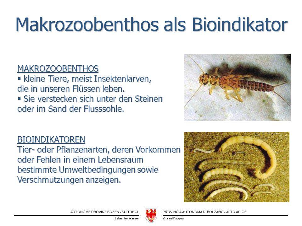 AUTONOME PROVINZ BOZEN - SÜDTIROLPROVINCIA AUTONOMA DI BOLZANO - ALTO ADIGE Vita nellacquaLeben im Wasser Makrozoobenthos als Bioindikator MAKROZOOBEN