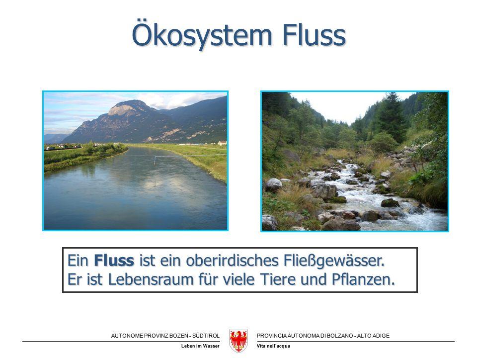 AUTONOME PROVINZ BOZEN - SÜDTIROLPROVINCIA AUTONOMA DI BOLZANO - ALTO ADIGE Vita nellacquaLeben im Wasser Ökosystem Fluss Ein Fluss ist ein oberirdisc