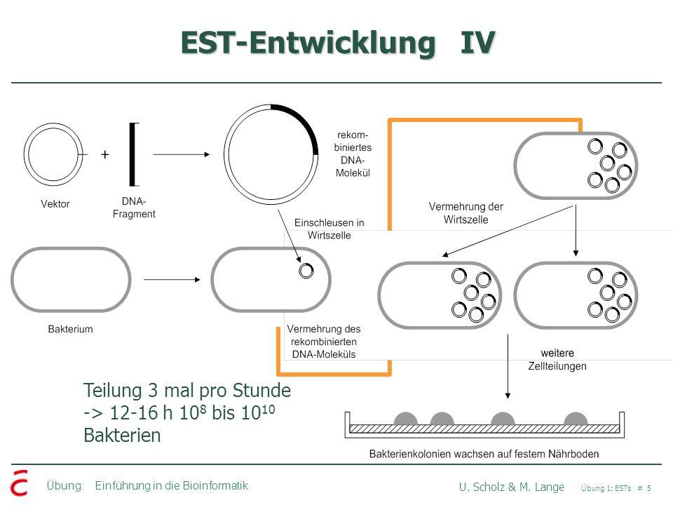 Übung: Einführung in die Bioinformatik U. Scholz & M. Lange Übung 1: ESTs # 6 EST-Entwicklung V