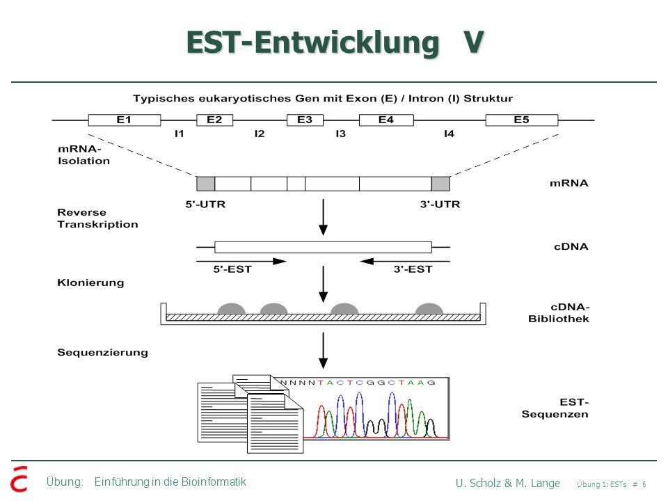 Übung: Einführung in die Bioinformatik U.Scholz & M.
