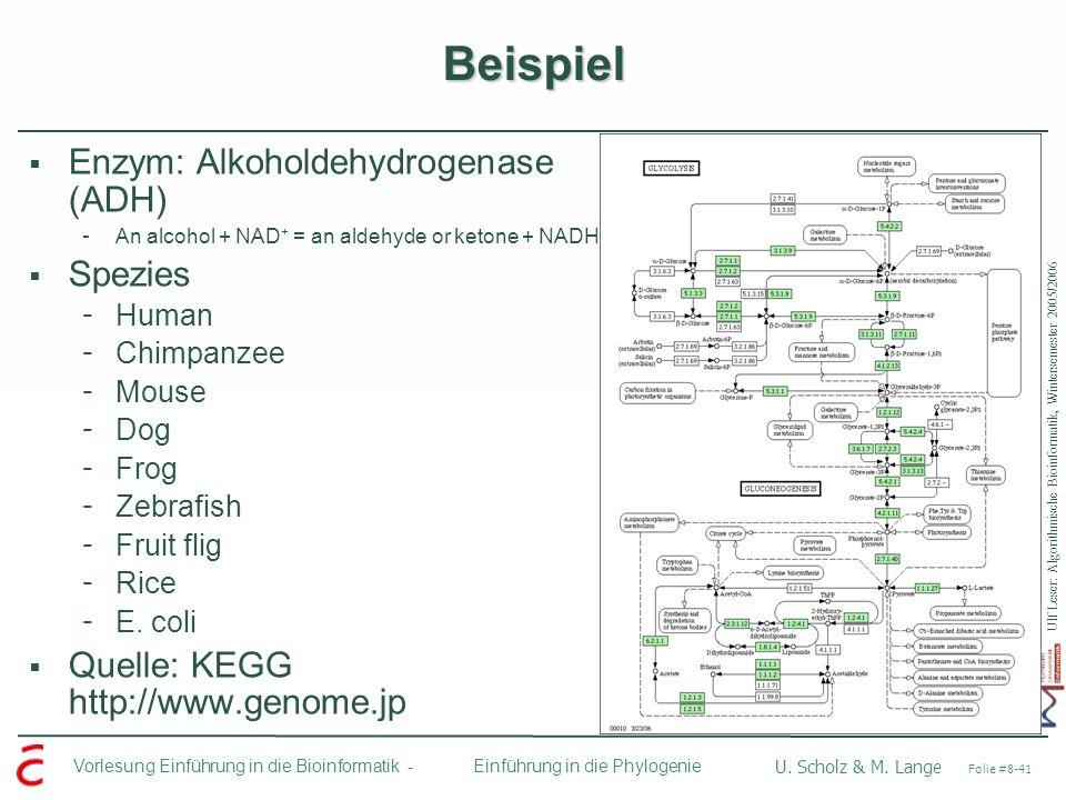 Ulf Leser: Algorithmische Bioinformatik, Wintersemester 2005/2006 Vorlesung Einführung in die Bioinformatik - U. Scholz & M. Lange Folie #8-41 Einführ