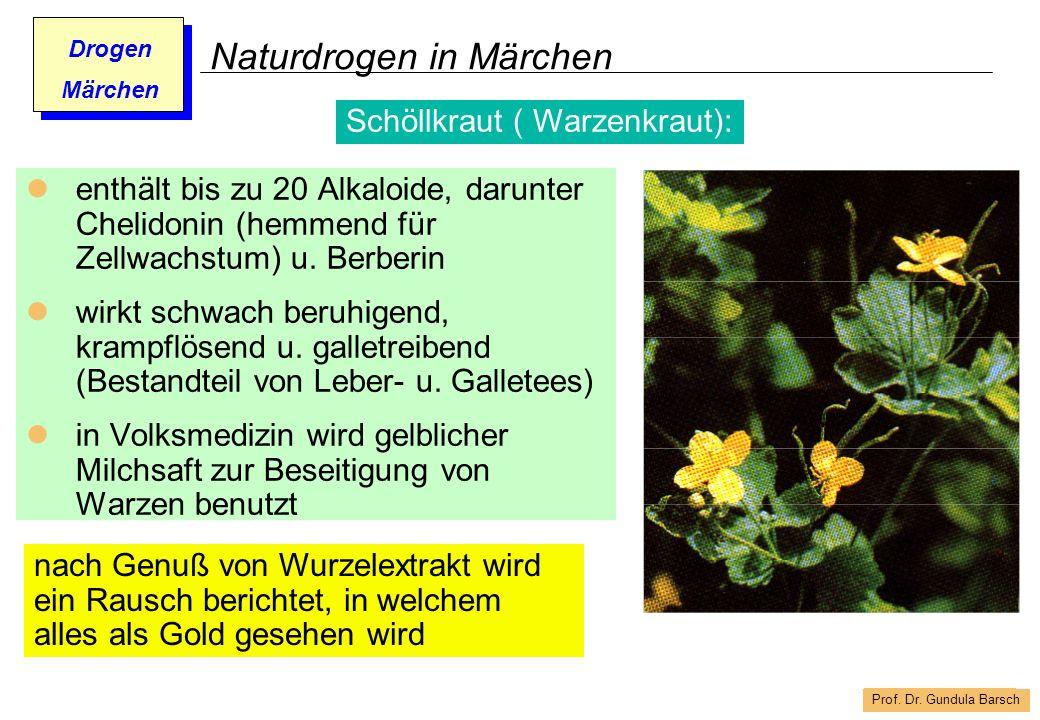 Prof. Dr. Gundula Barsch Drogen Märchen Naturdrogen in Märchen enthält bis zu 20 Alkaloide, darunter Chelidonin (hemmend für Zellwachstum) u. Berberin