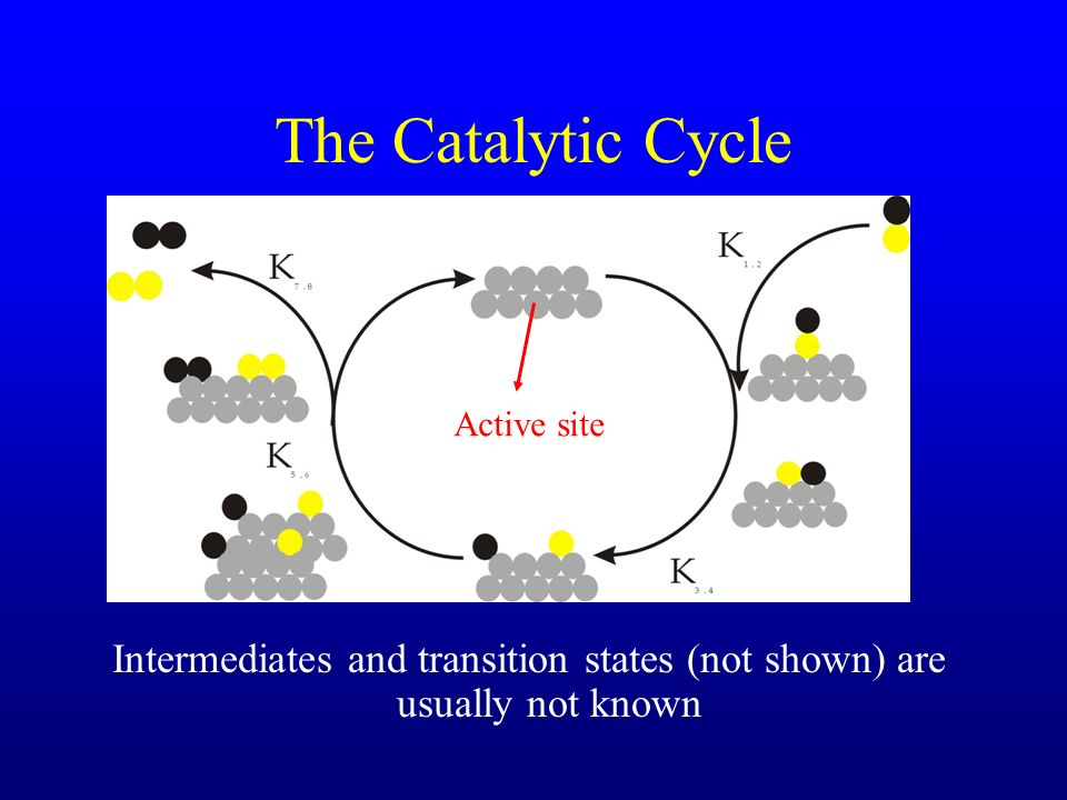 The Catalytic Cycle Intermediates and transition states (not shown) are usually not known Active site