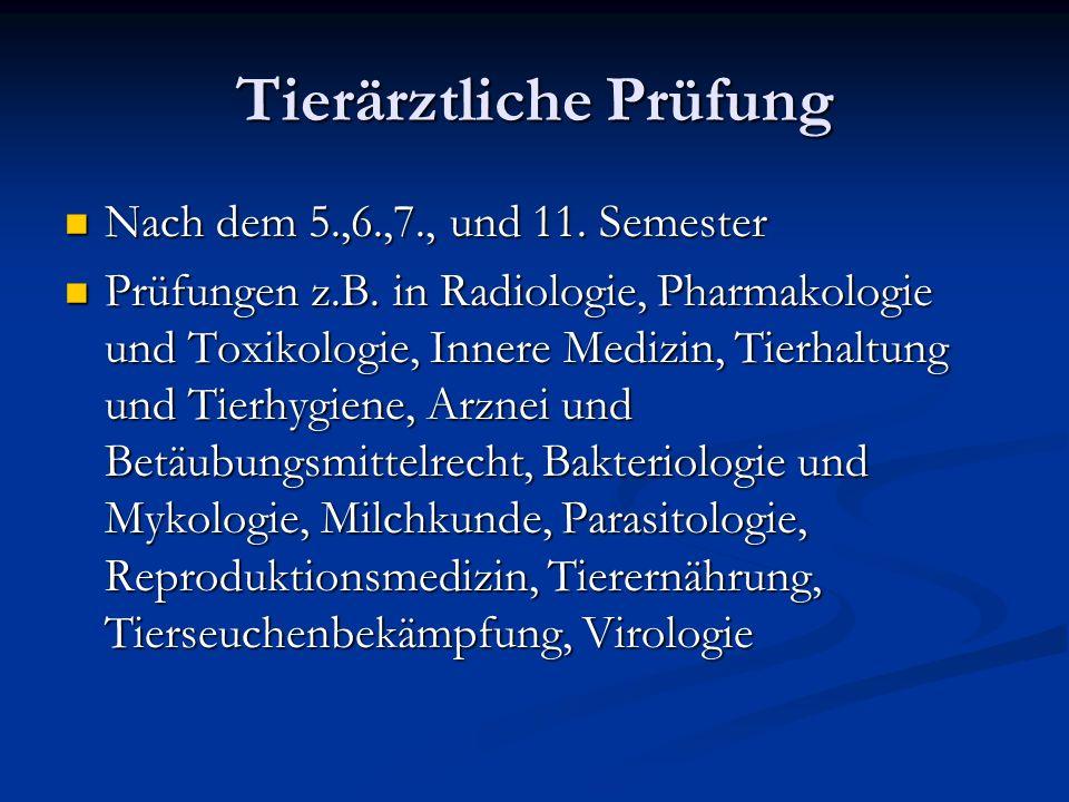 Tierärztliche Prüfung Nach dem 5.,6.,7., und 11. Semester Nach dem 5.,6.,7., und 11. Semester Prüfungen z.B. in Radiologie, Pharmakologie und Toxikolo