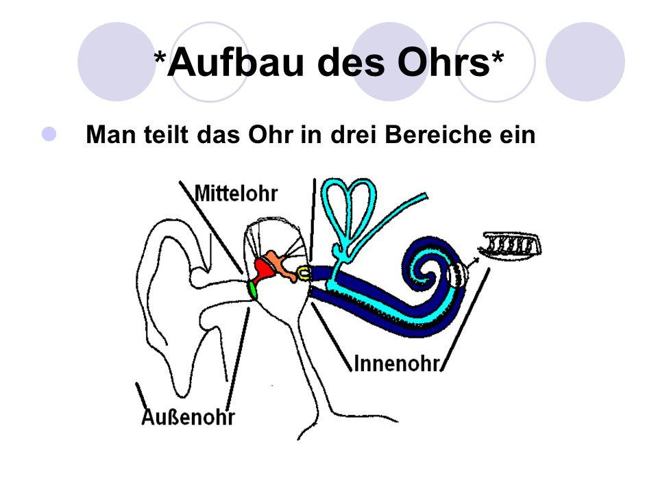 * Aufbau des Ohrs * Man teilt das Ohr in drei Bereiche ein