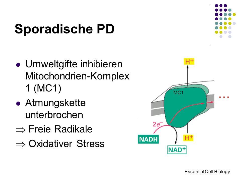Sporadische PD Essential Cell Biology Umweltgifte inhibieren Mitochondrien-Komplex 1 (MC1) Atmungskette unterbrochen Freie Radikale Oxidativer Stress
