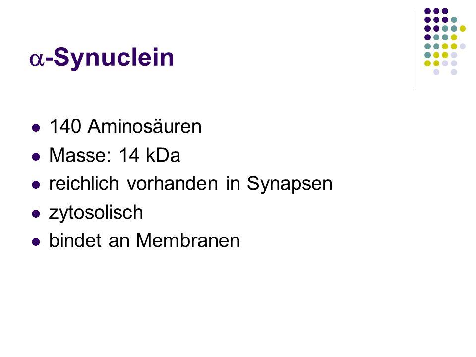 -Synuclein 140 Aminosäuren Masse: 14 kDa reichlich vorhanden in Synapsen zytosolisch bindet an Membranen
