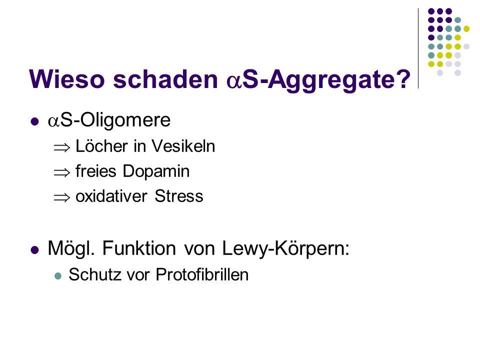Wieso schaden S-Aggregate? S-Oligomere Löcher in Vesikeln freies Dopamin oxidativer Stress Mögl. Funktion von Lewy-Körpern: Schutz vor Protofibrillen