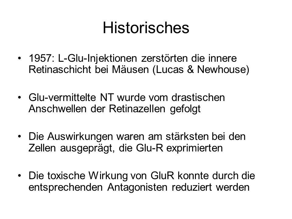 Historisches 1957: L-Glu-Injektionen zerstörten die innere Retinaschicht bei Mäusen (Lucas & Newhouse) Glu-vermittelte NT wurde vom drastischen Anschwellen der Retinazellen gefolgt Die Auswirkungen waren am stärksten bei den Zellen ausgeprägt, die Glu-R exprimierten Die toxische Wirkung von GluR konnte durch die entsprechenden Antagonisten reduziert werden