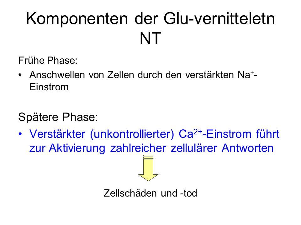 Komponenten der Glu-vernitteletn NT Frühe Phase: Anschwellen von Zellen durch den verstärkten Na + - Einstrom Spätere Phase: Verstärkter (unkontrollierter) Ca 2+ -Einstrom führt zur Aktivierung zahlreicher zellulärer Antworten Zellschäden und -tod