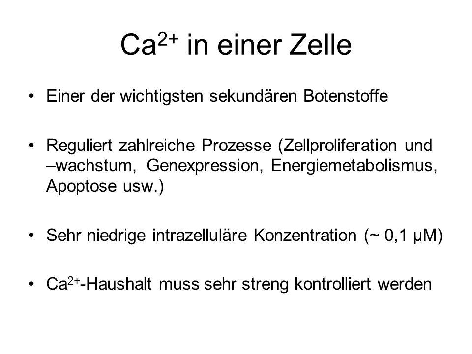 Ca 2+ in einer Zelle Einer der wichtigsten sekundären Botenstoffe Reguliert zahlreiche Prozesse (Zellproliferation und –wachstum, Genexpression, Energiemetabolismus, Apoptose usw.) Sehr niedrige intrazelluläre Konzentration (~ 0,1 µM) Ca 2+ -Haushalt muss sehr streng kontrolliert werden