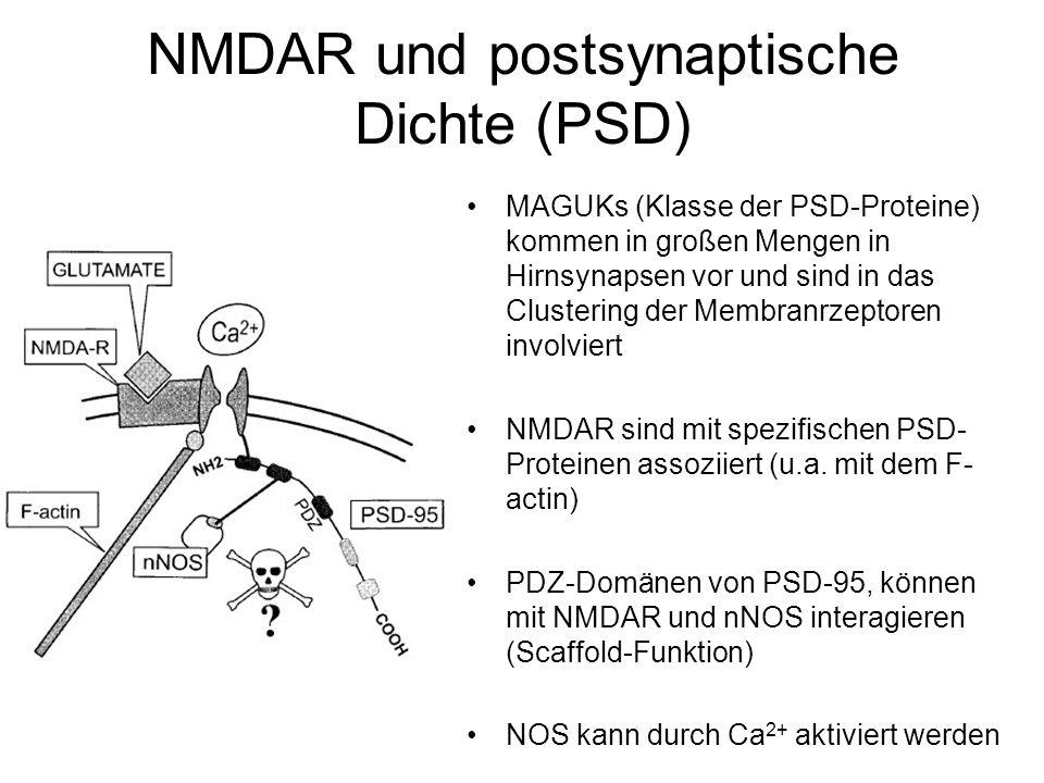 NMDAR und postsynaptische Dichte (PSD) MAGUKs (Klasse der PSD-Proteine) kommen in großen Mengen in Hirnsynapsen vor und sind in das Clustering der Membranrzeptoren involviert NMDAR sind mit spezifischen PSD- Proteinen assoziiert (u.a.