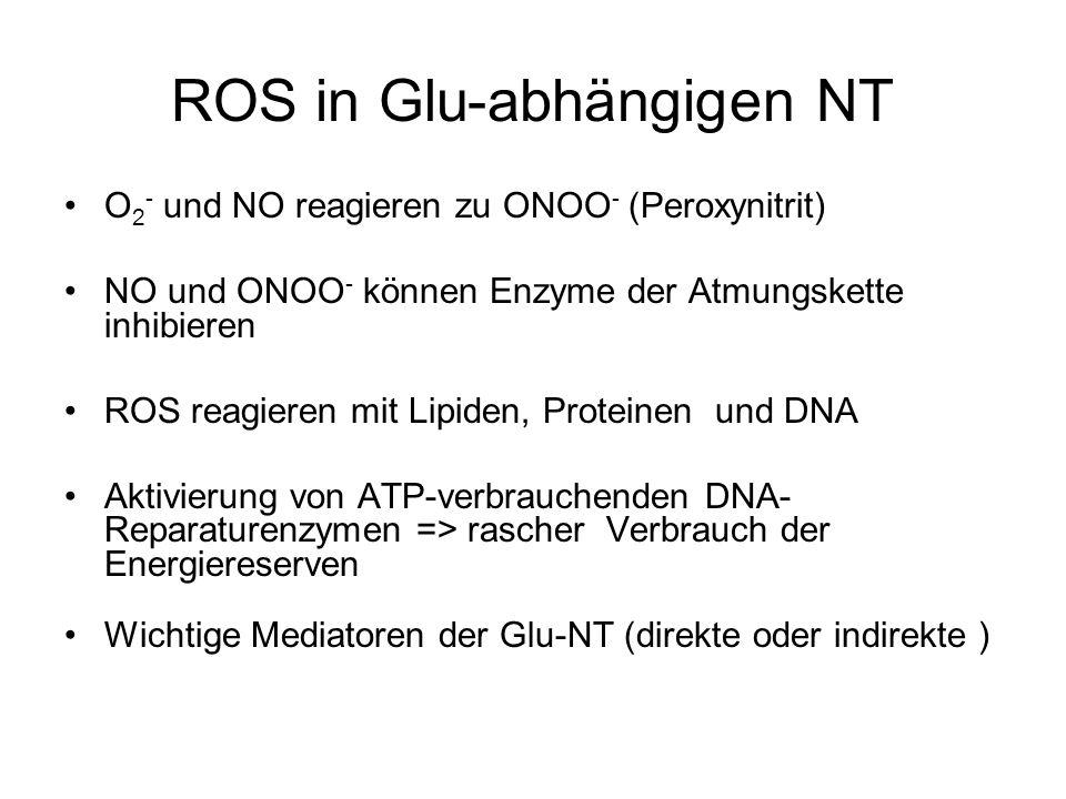 ROS in Glu-abhängigen NT O 2 - und NO reagieren zu ONOO - (Peroxynitrit) NO und ONOO - können Enzyme der Atmungskette inhibieren ROS reagieren mit Lipiden, Proteinen und DNA Aktivierung von ATP-verbrauchenden DNA- Reparaturenzymen => rascher Verbrauch der Energiereserven Wichtige Mediatoren der Glu-NT (direkte oder indirekte )