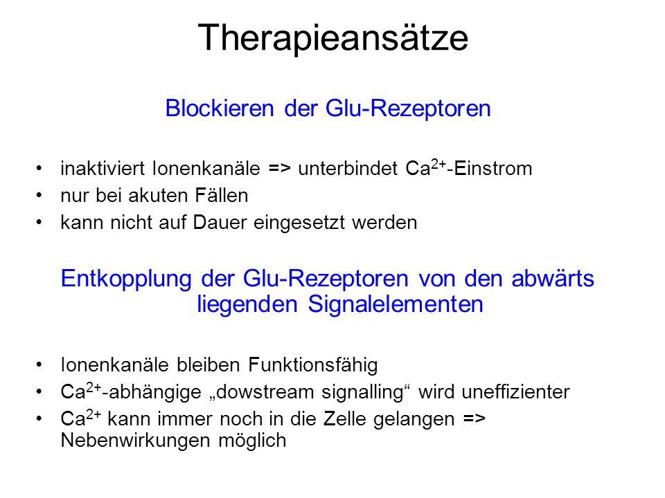 Therapieansätze Blockieren der Glu-Rezeptoren inaktiviert Ionenkanäle => unterbindet Ca 2+ -Einstrom nur bei akuten Fällen kann nicht auf Dauer eingesetzt werden Entkopplung der Glu-Rezeptoren von den abwärts liegenden Signalelementen Ionenkanäle bleiben Funktionsfähig Ca 2+ -abhängige dowstream signalling wird uneffizienter Ca 2+ kann immer noch in die Zelle gelangen => Nebenwirkungen möglich