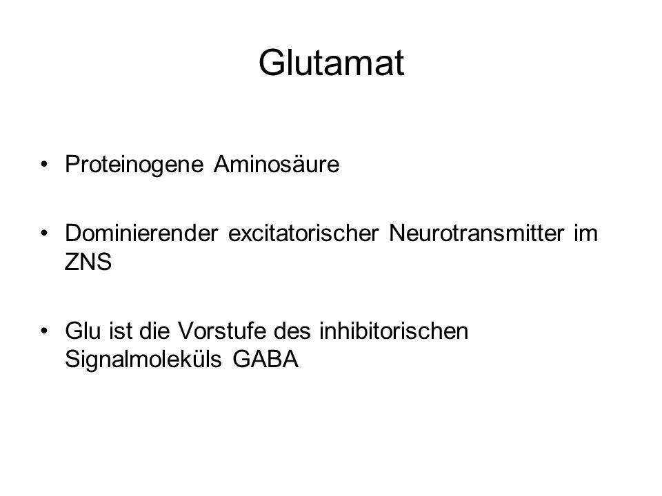 Glutamat Proteinogene Aminosäure Dominierender excitatorischer Neurotransmitter im ZNS Glu ist die Vorstufe des inhibitorischen Signalmoleküls GABA