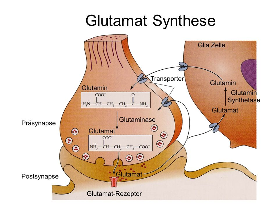 Glutamat Synthese