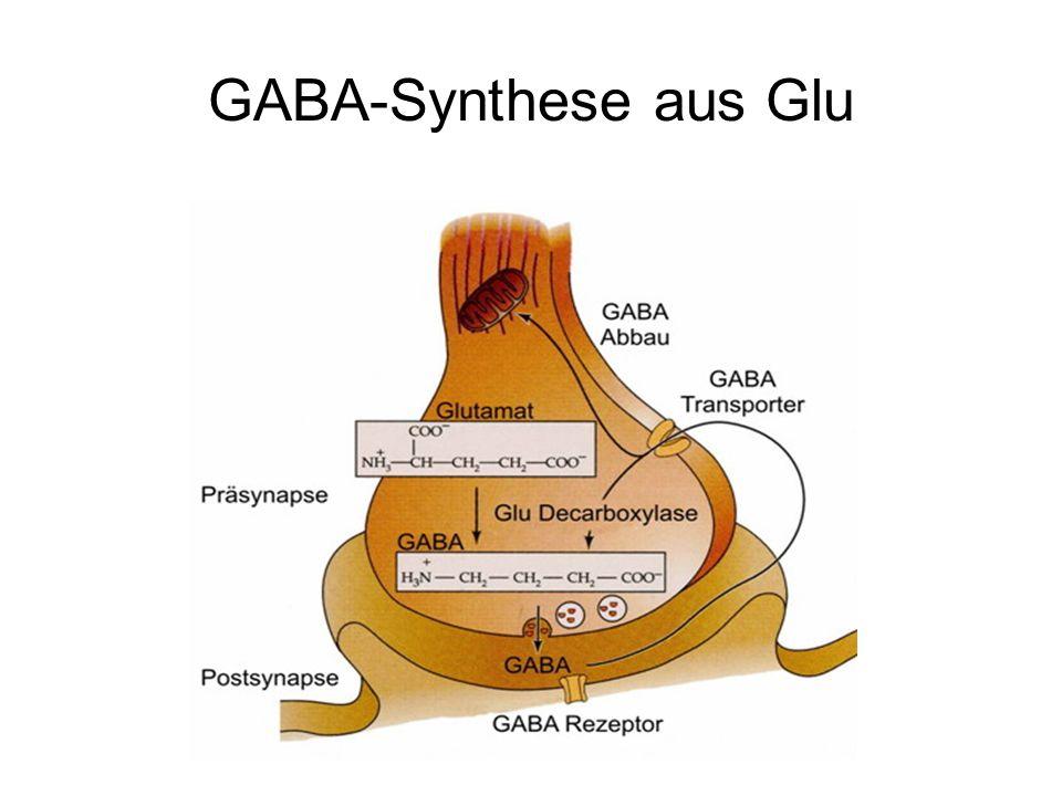 Ionotrope Glu-Rezeptoren Typen: NMDA NR1, NR2A-D, NR3A AMPA GluR1-4 Kainat GluR5-7, KA1,2 Kommen im ZNS Tetra- und Pentamere Leiten K +, Na +, Ca 2+
