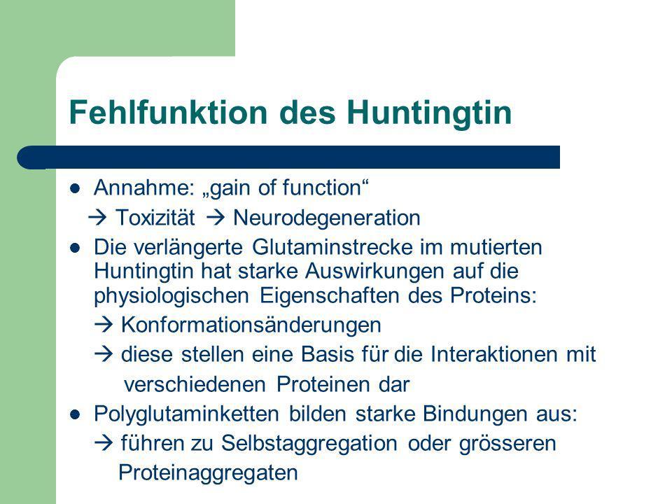 Fehlfunktion des Huntingtin Annahme: gain of function Toxizität Neurodegeneration Die verlängerte Glutaminstrecke im mutierten Huntingtin hat starke A