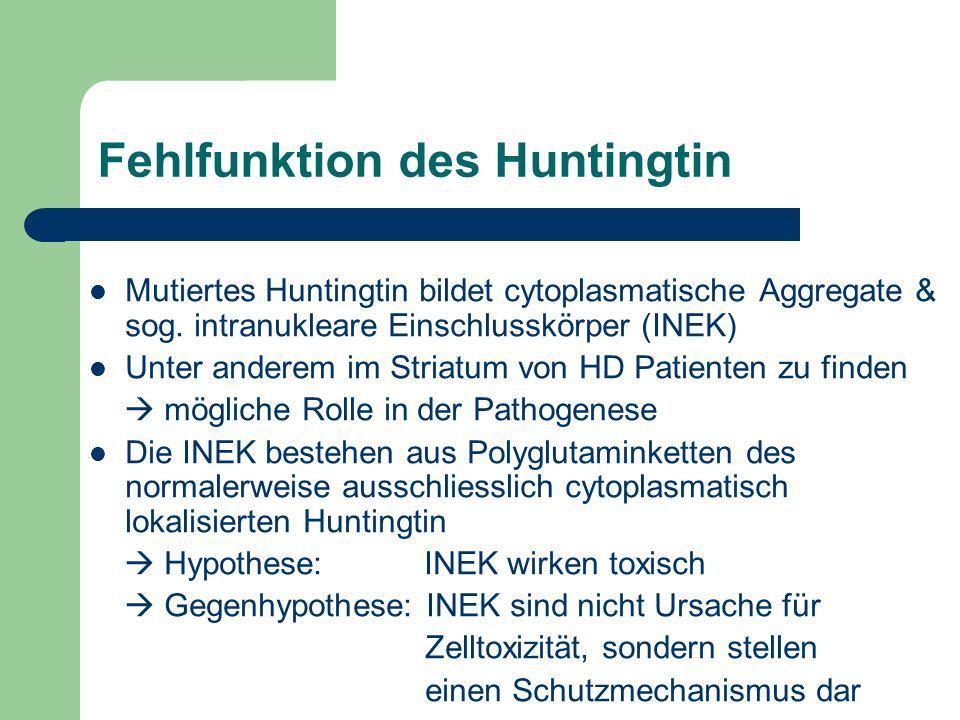 Fehlfunktion des Huntingtin Mutiertes Huntingtin bildet cytoplasmatische Aggregate & sog. intranukleare Einschlusskörper (INEK) Unter anderem im Stria