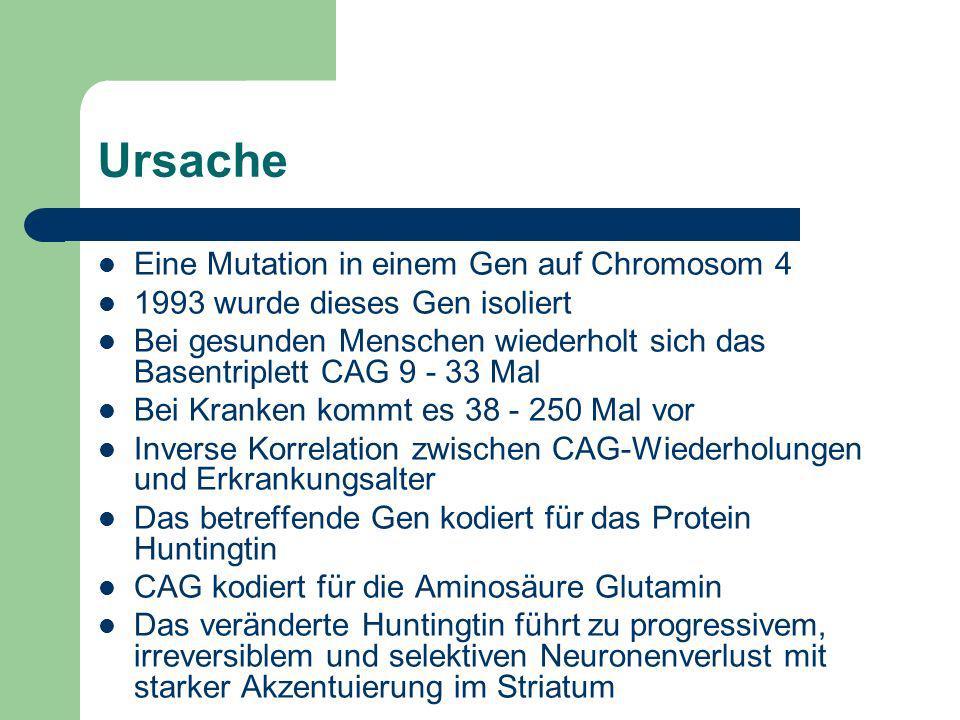 Ursache Eine Mutation in einem Gen auf Chromosom 4 1993 wurde dieses Gen isoliert Bei gesunden Menschen wiederholt sich das Basentriplett CAG 9 - 33 M