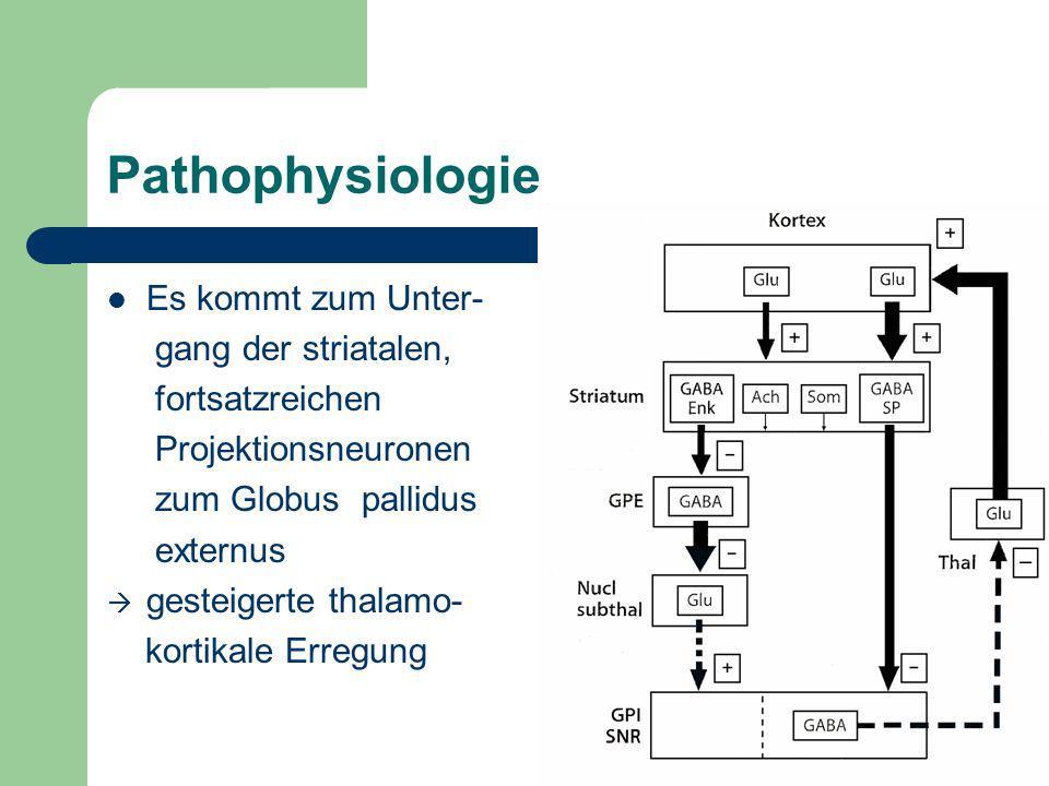 Pathophysiologie Es kommt zum Unter- gang der striatalen, fortsatzreichen Projektionsneuronen zum Globus pallidus externus gesteigerte thalamo- kortik